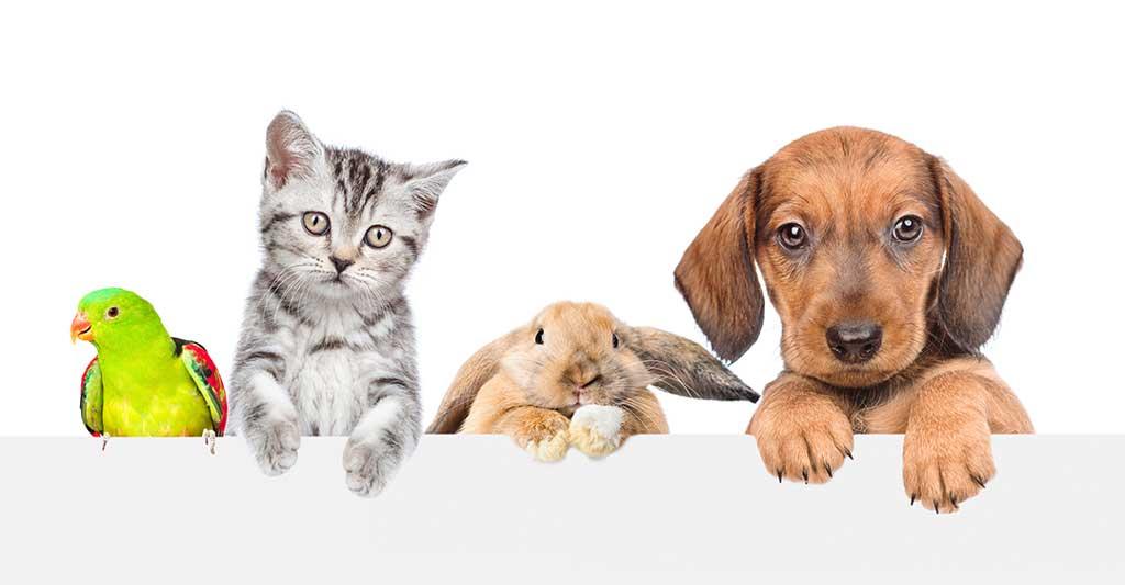 pájaro, perico, gatito, gato, conejo, conejito, perrito, perro, mascotas, acuerdo nupcial de mascotas,beneficios de añadir a tu mascota al acuerdo prenupcial